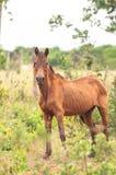 Cavalo verde magro na grama verde Fotografia de Stock