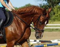 Cavalo vermelho no prado contra um céu Fotografia de Stock Royalty Free