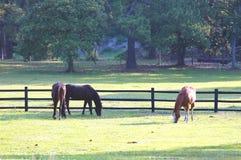 Cavalos # 1 imagens de stock