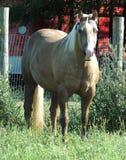 Cavalos 4 Foto de Stock