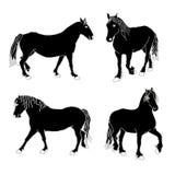 Cavalos Fotos de Stock