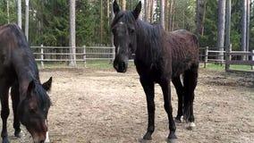 Cavalos video estoque