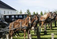 Cavalos amarrados a um lugar de estacionamento foto de stock