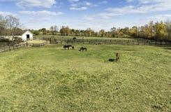 Cavalos atrás de uma cerca da exploração agrícola Imagens de Stock Royalty Free