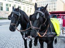 Cavalos bonitos Fotos de Stock