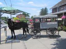 Cavalos bonitos do trabalho para os Amish em Pensilvânia imagem de stock royalty free