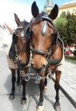 Cavalos bonitos no chicote de fios foto de stock