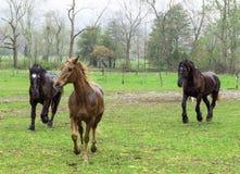 Cavalos bonitos que correm na chuva Imagens de Stock