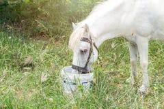 Cavalos brancos no campo verde no jardim, natureza Fotografia de Stock Royalty Free