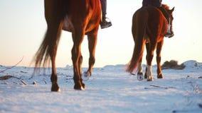 Cavalos com cavaleiros e o inverno no por do sol, close-up Cavalo bonito com um cavaleiro no inverno, movimento lento disparar filme