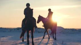 Cavalos com cavaleiros e o inverno no por do sol, close-up Cavalo bonito com um cavaleiro no inverno, movimento lento disparar video estoque