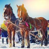 Cavalos com os pequenos trenós no banco do rio congelado no inverno foto de stock royalty free