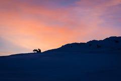 Cavalos contra o nascer do sol em Islândia foto de stock