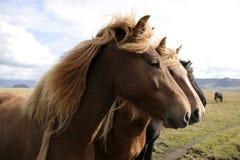 Cavalos da árvore Imagens de Stock Royalty Free