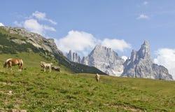 Cavalos da montanha Imagens de Stock