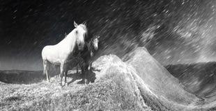Cavalos da neve na tempestade imagens de stock royalty free