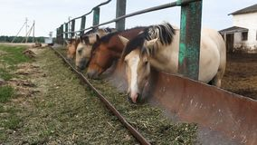 Cavalos de alimentação na pena vídeos de arquivo