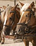 Cavalos de carro, Salzburg Áustria fotografia de stock