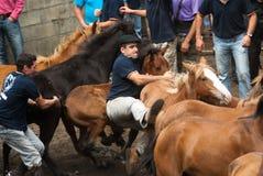 Cavalos de equitação Fotografia de Stock Royalty Free