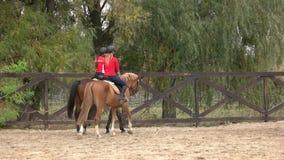 Cavalos de equitação traseiros das jovens mulheres da vista fora video estoque