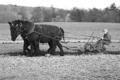 Cavalos de esboço fotografia de stock royalty free