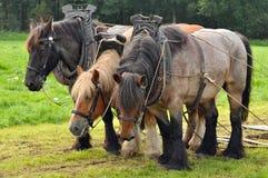 Cavalos de esboço belgas Imagem de Stock Royalty Free