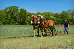 Cavalos de esboço que aram o campo Foto de Stock Royalty Free
