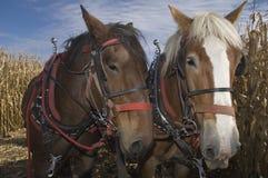 Cavalos de esboço Foto de Stock Royalty Free