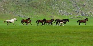 Cavalos de galope Fotografia de Stock Royalty Free