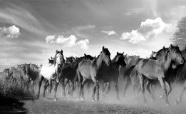 Cavalos de galope preto e branco imagem de stock