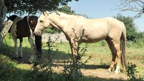 4 cavalos de k que descansam no campo verde na vila das Astúrias no dia sunlighted filme
