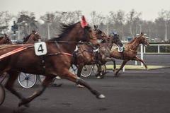 Cavalos de raça Foto de Stock