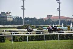 Cavalos de raça Imagem de Stock Royalty Free