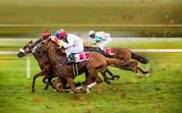 Cavalos de raça com os jóqueis na casa em linha reta Imagens de Stock