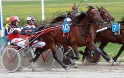 Cavalos de raça do chicote de fios