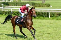 Cavalos de raça na trilha de Partynice Foto de Stock