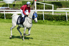 Cavalos de raça na trilha de Partynice Fotografia de Stock Royalty Free