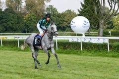 Cavalos de raça na trilha de Partynice Foto de Stock Royalty Free