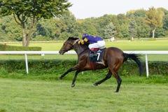 Cavalos de raça na trilha de Partynice Fotos de Stock