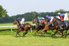 Cavalos de raça na trilha de Partynice Fotografia de Stock