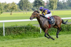 Cavalos de raça na trilha de Partynice Imagens de Stock Royalty Free