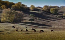 Cavalos de sela Fotos de Stock