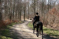 Cavalos dinamarqueses Imagens de Stock