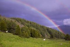 Cavalos do arco-íris e do whire no vale imagens de stock