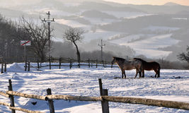 Cavalos do inverno Foto de Stock Royalty Free