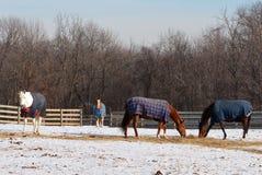 Cavalos do inverno Imagens de Stock Royalty Free