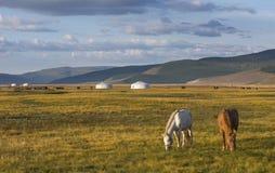 Cavalos do Mongolian em uma paisagem de mongolia do norte Fotografia de Stock