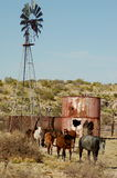 Cavalos do rancho Imagens de Stock