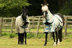 Cavalos do vestido-acima contra moscas de cavalo imagens de stock