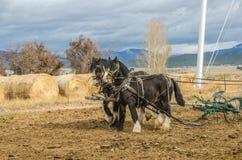 Cavalos e arado de condado Imagem de Stock Royalty Free